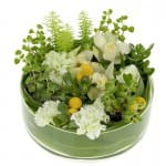 Creating Your Dish Garden