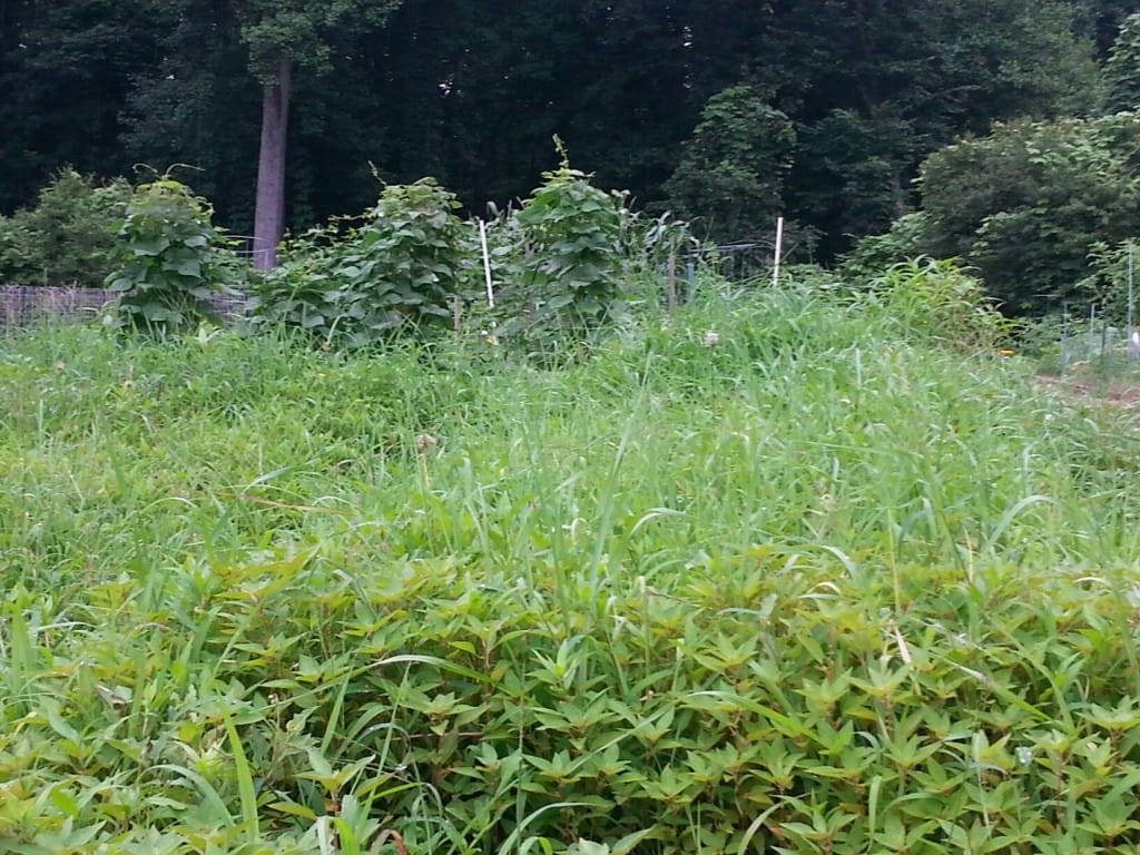 Weeding in Your Georgia Garden